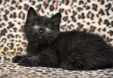 Kätzchen auf einem Leoparddruckhintergrund Stockfoto