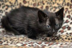 Kätzchen auf einem Leoparddruckhintergrund Lizenzfreies Stockbild