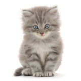 Kätzchen auf einem weißen Hintergrund Stockbilder