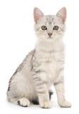 Kätzchen auf einem weißen Hintergrund Stockbild
