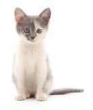 Kätzchen auf einem weißen Hintergrund Lizenzfreie Stockfotos