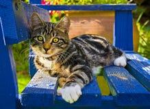 Kätzchen auf einer Bank Lizenzfreie Stockbilder