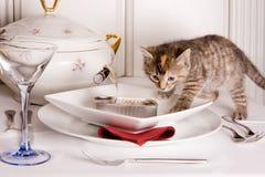 Kätzchen auf einer Tabelle Stockbild