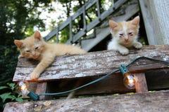 Kätzchen auf natürlichem Sonnenlicht der Palette Stockbilder