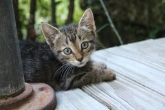 Kätzchen auf Portal Lizenzfreie Stockbilder