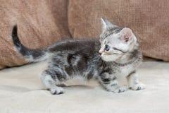 Kätzchen auf Sofa - Archivbild Lizenzfreie Stockfotos