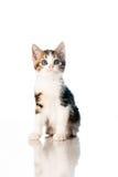 Kätzchen auf weißem Hintergrund Stockbild
