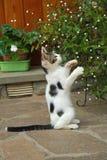 Kätzchen auf zwei Tatzen lizenzfreies stockfoto