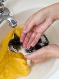 Kätzchen bathtime Lizenzfreie Stockfotos