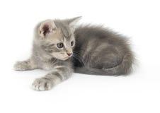 Kätzchen betriebsbereit sich zu stürzen Lizenzfreies Stockfoto