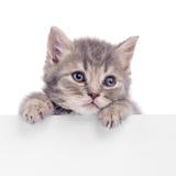 Kätzchen, das Anschlagtafel hält Lizenzfreies Stockbild
