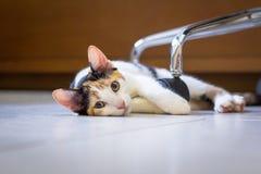 Kätzchen, das auf Boden legt Stockbilder