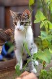 Kätzchen, das auf der Straße sitzt Lizenzfreies Stockfoto