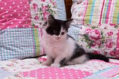 Kätzchen, das auf einem Bett sitzt Lizenzfreies Stockbild