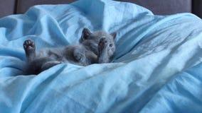 Kätzchen, das auf einem blauen Bett liegt stock video footage