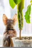 Kätzchen, das auf einem Fensterbrett mit einer Blume sitzt und heraus das Fenster schaut stockfoto