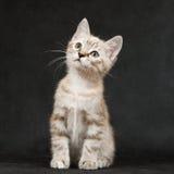 Kätzchen, das auf einem Schwarzen sitzt. Lizenzfreie Stockfotos