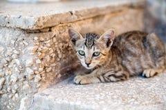 Kätzchen, das auf einem Steinschritt liegt Stockfotos