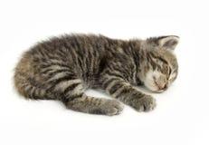 Kätzchen, das auf einem weißen Hintergrund ein Schlaefchen hält Lizenzfreie Stockfotos