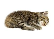 Kätzchen, das auf einem weißen Hintergrund ein Schlaefchen hält Lizenzfreie Stockbilder