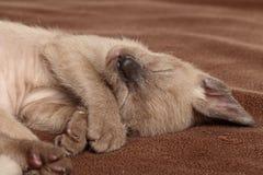 Kätzchen, das auf einer braunen Decke schläft Stockfotografie