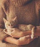 Kätzchen, das auf Händen schläft Stockfotografie