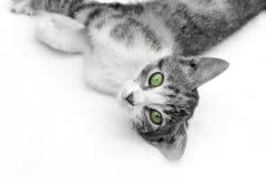 Kätzchen, das auf sein seiten- B&W und Grün legt Lizenzfreies Stockfoto