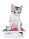Kätzchen, das auf Stapel von Büchern sitzt Stockfoto
