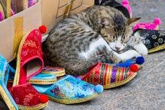 Kätzchen, das auf türkischen Pantoffeln am großartigen Basar schläft Lizenzfreie Stockbilder