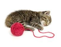 Kätzchen, das auf weißem Hintergrund ein Schlaefchen hält Stockfotos