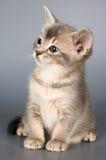 Kätzchen, das das erste mal aufwirft Stockfotografie