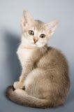 Kätzchen, das das erste mal aufwirft Stockfoto