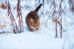 Kätzchen, das in den Schnee geht Lizenzfreie Stockfotografie