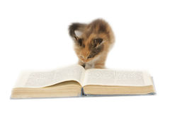 Kätzchen, das ein Buch liest lizenzfreie stockfotos