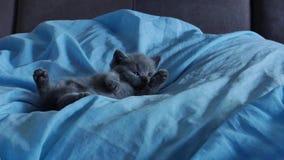 Kätzchen, das in einem blauen Bett liegt stock video footage