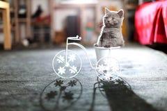Kätzchen, das in einem Fahrradblumentopf sitzt Lizenzfreie Stockfotografie