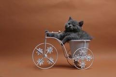 Kätzchen, das in einem Fahrradblumentopf sitzt Lizenzfreie Stockbilder