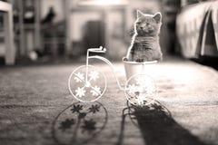 Kätzchen, das in einem Fahrradblumentopf sitzt stockbild