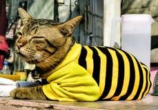 Kätzchen, das einen schwarzen und gelben Pullover trägt stockfoto