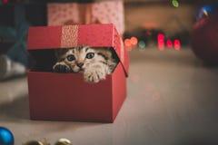 Kätzchen, das in einer Geschenkbox spielt Lizenzfreie Stockbilder