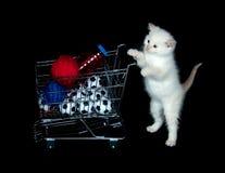 Kätzchen, das Einkaufswagen drückt Stockbild