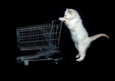 Kätzchen, das Einkaufswagen drückt stockbilder
