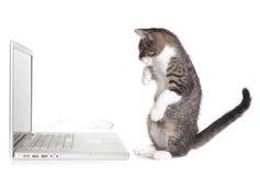 Kätzchen, das herauf das Betrachten des Computers sitzt Stockfoto