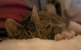 Kätzchen, das heraus erreicht Lizenzfreie Stockbilder