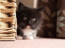 Kätzchen, das hinter Korb sich versteckt Lizenzfreie Stockfotos