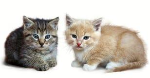 Kätzchen, das Kamera betrachtet Getrennt auf weißem Hintergrund Lizenzfreie Stockfotos