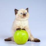 Kätzchen, das mit Apfel spielt Lizenzfreie Stockfotos