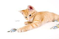 Kätzchen, das mit Bonbons spielt Lizenzfreie Stockfotos