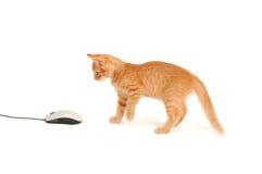 Kätzchen, das mit Computermaus spielt Stockfotografie