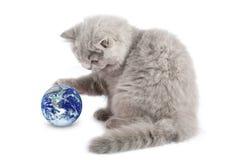 Kätzchen, das mit dem Erdeplaneten getrennt spielt Stockbilder